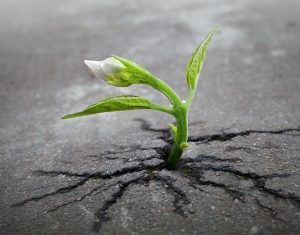 factor resiliencia pautas dafo resiliencia mejorar mi resiliencia frases célebres sobre resiliencia influencia de resiliencia en el rendimiento